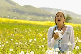 Symptoms of Pollent Allergy Image